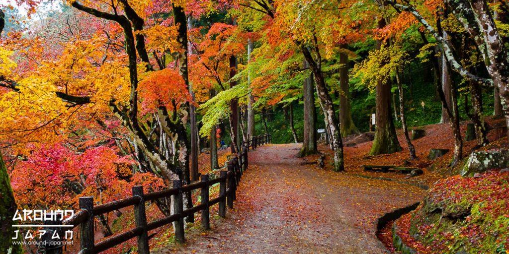 ใบไม้เปลี่ยนสีทีเด็ดฤดูใบไม้ร่วง