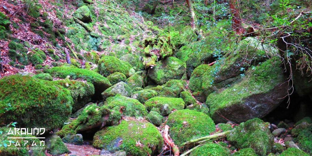 ตะลุยป่าดึกดำบรรพ์กันที่ Shiratani Unsuikyo Ravine