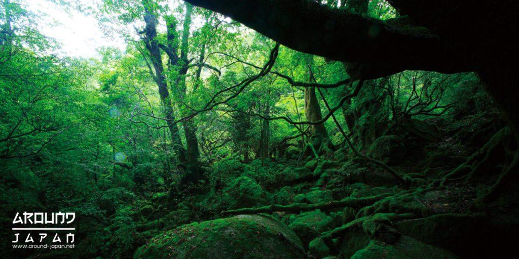 เกาะยากุชิมะ ป่าและธรรมชาติ