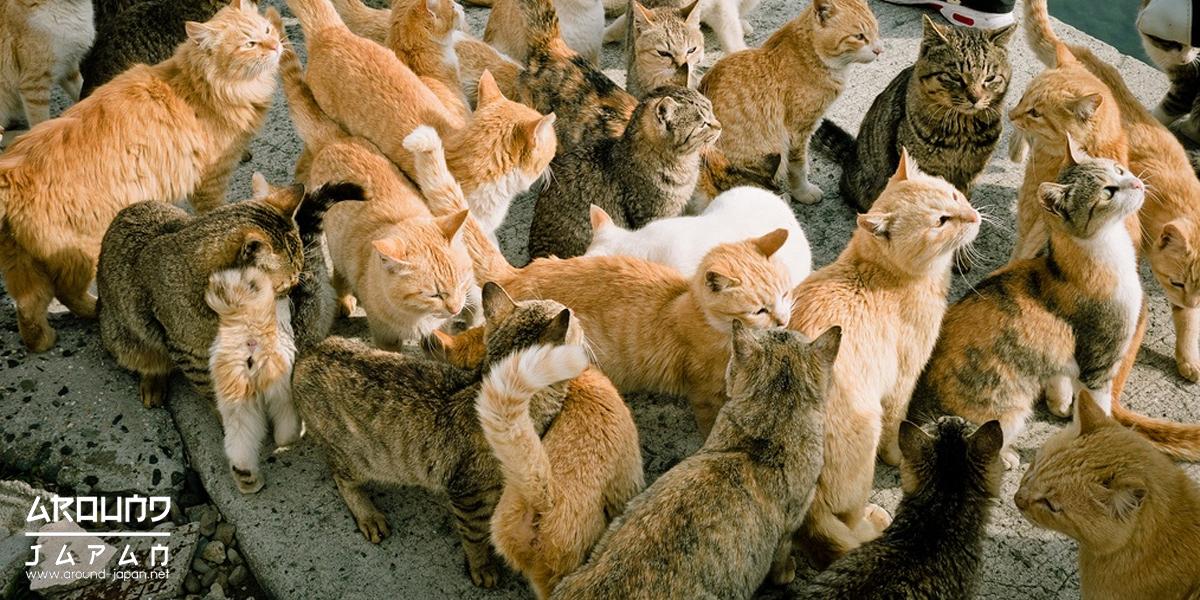 5 เกาะแมว ของเหล่าทาส