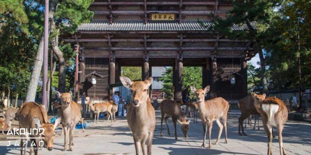 Nara เมืองแห่งกวาง