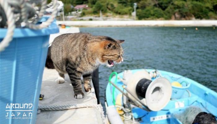 เกาะเอโนะชิมะ เที่ยวทะเล ชมแมว สักการะศาลเจ้า เกาะเอโนะชิมะ เป็นพื้นที่ที่ไม่ได้มีขนาดใหญ่มาก แต่ก็มีผู้คนที่นิยมเดินทางมาท่องเที่ยว