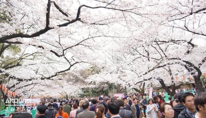 สถานที่ท่องเที่ยวฤดูใบไม้ผลิของญี่ปุ่น ฤดูกาลใบไม้ผลิ เข้ามาก็เป็นสัญญาณว่าดอกซากุระกำลังจะบานรวมถึงดอกไม้อีกมากมายหลายชนิดที่จะบานสะพรั่ง