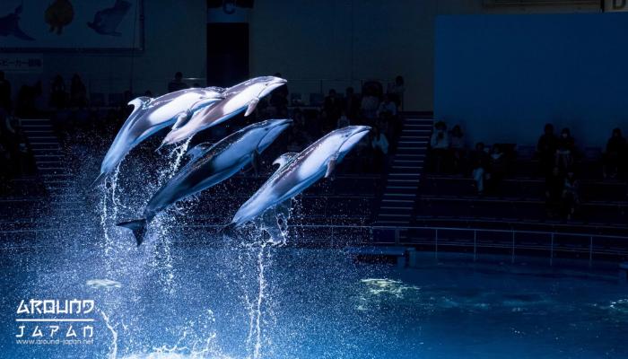 ชมพิพิธภัณฑ์ทะเลเรืองแสงแห่ง Aqua Park Shinagawa อควาพาร์ค ที่จังหวัดโตเกียว ชินากาวะ มีพิพิธภัณฑ์สัตว์น้ำ หรืออุโมงค์สัตว์น้ำแห่งหนึ่ง