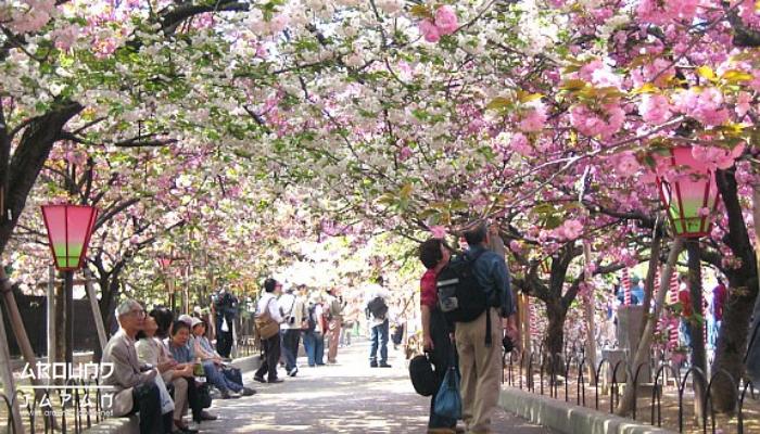 5 สถานที่ชมซากุระสวยที่สุดในญี่ปุ่น งาน ฮานามิ เป็นคำเรียกการชมดอกซากุระในช่วงฤดูใบไม้ผลิที่ถือที่คนญี่ปุ่นจะออกมากางเสื่อเพื่อปิกนิกกัน