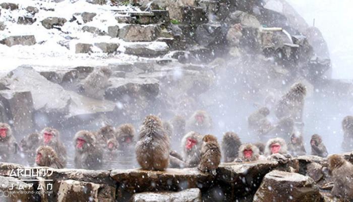 หนาวนี้ไปไหนดี 7 สถานที่ท่องเที่ยวญี่ปุ่นหน้าหนาว ฤดูหนาวของบ้านเรานั้นมีแค่ปีละไม่กี่วัน ไม่ทันได้รู้สึกหนาวก็กลับมาร้อนอีกซะแล้ว หลายคนเลย